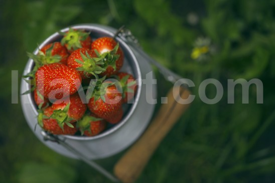 Fraises sur pot de lait ancien - printemps photo