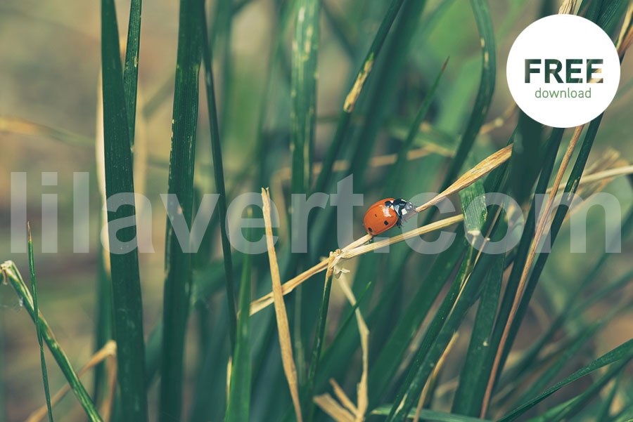 Ladybug / Coccinelle ambiance free-download