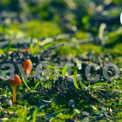 Champignon automne 7352  / free download photo stock
