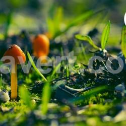 champignon automne 7353 / free download photo stock