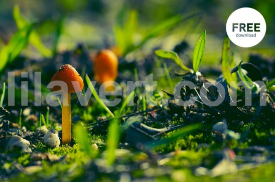 champignon automne 7353 / free download photo stock