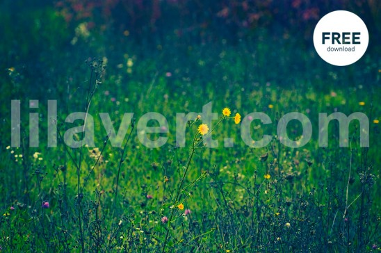 Nature flowers ambiance / free download photo stock
