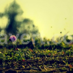 Nature single flower 7260 Stock photos