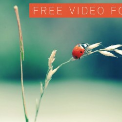 Free Ladybug video footage