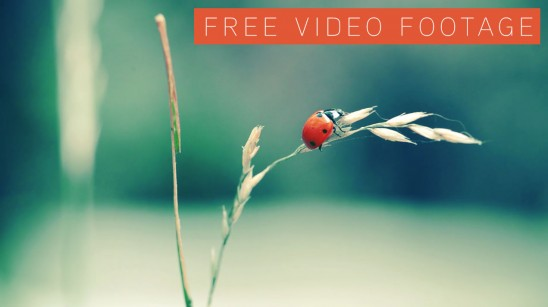 Ladybug - Free video footage
