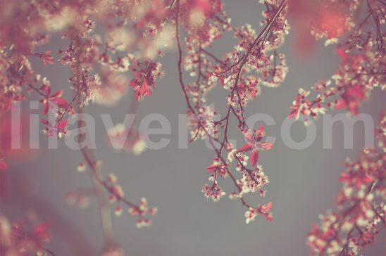 Vintage-Spring-preview-stock-image